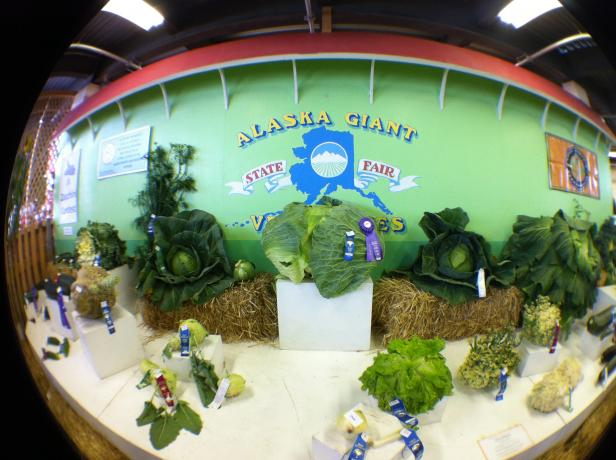 olloclip: State Fair - Fish Eye