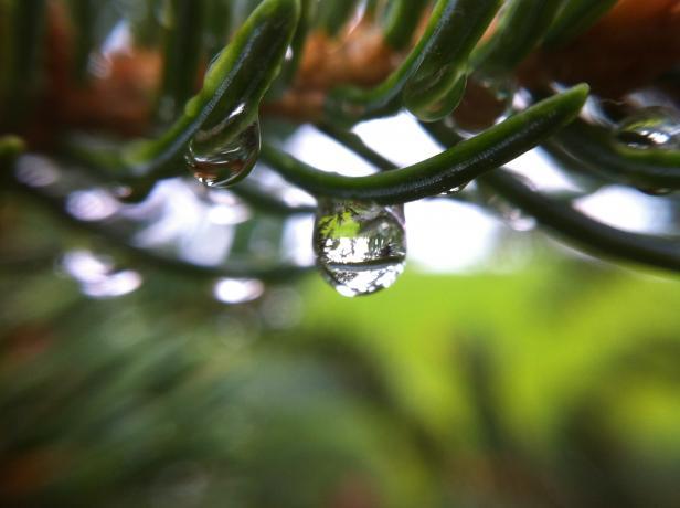 olloclip: Raindrop - Macro