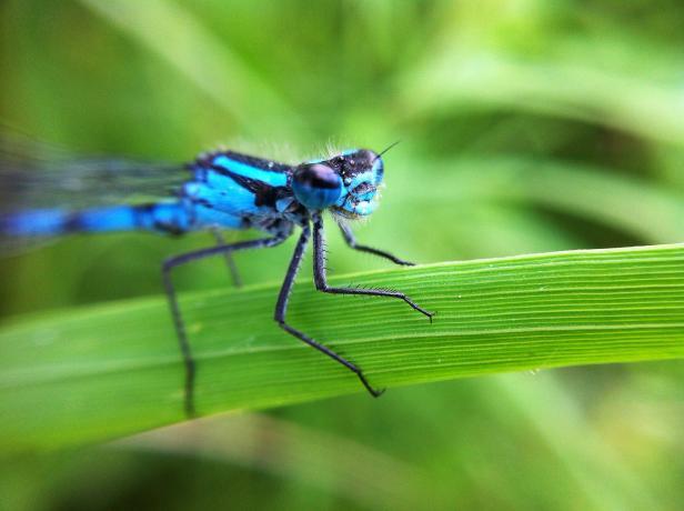 olloclip: Bug - Macro