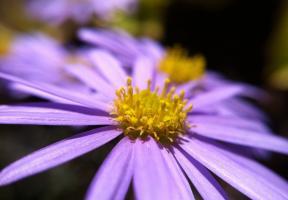 olloclip: Flower - Macro